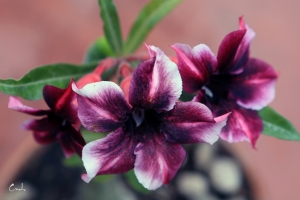Hoa su dep 10