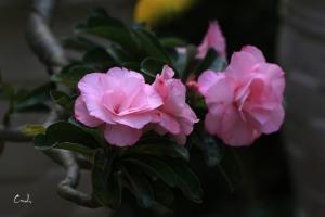 Hoa su dep 50