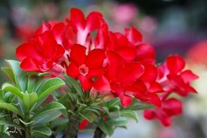 Hoa su dep 58