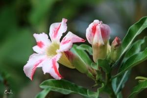 Hoa su dep 6